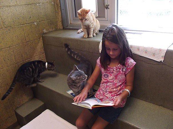 gatto libro1