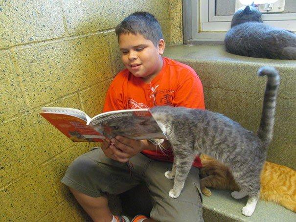 gatto libro2