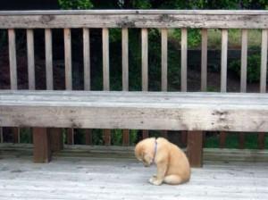 Esperimento sociale contro l'abbandono dei cani. Tu, fermeresti questo gesto?