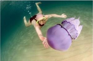 meduse giganti2