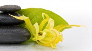 Ylang Ylang un fiore esotico dai molteplici usi.