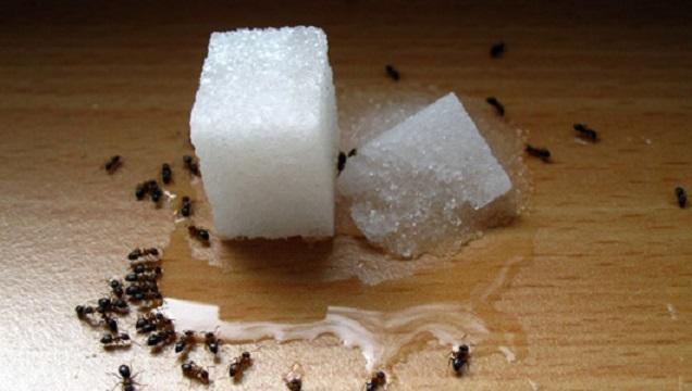 Allontanare le formiche con metodi naturali.