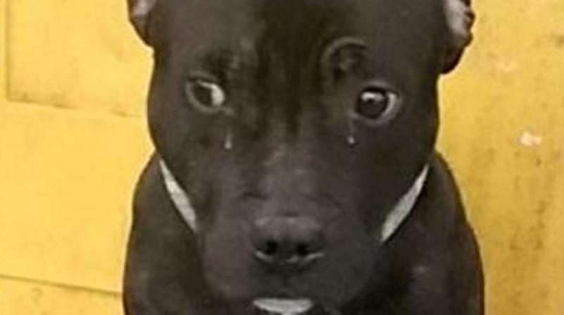 Kai il cane abbandonato alla stazione