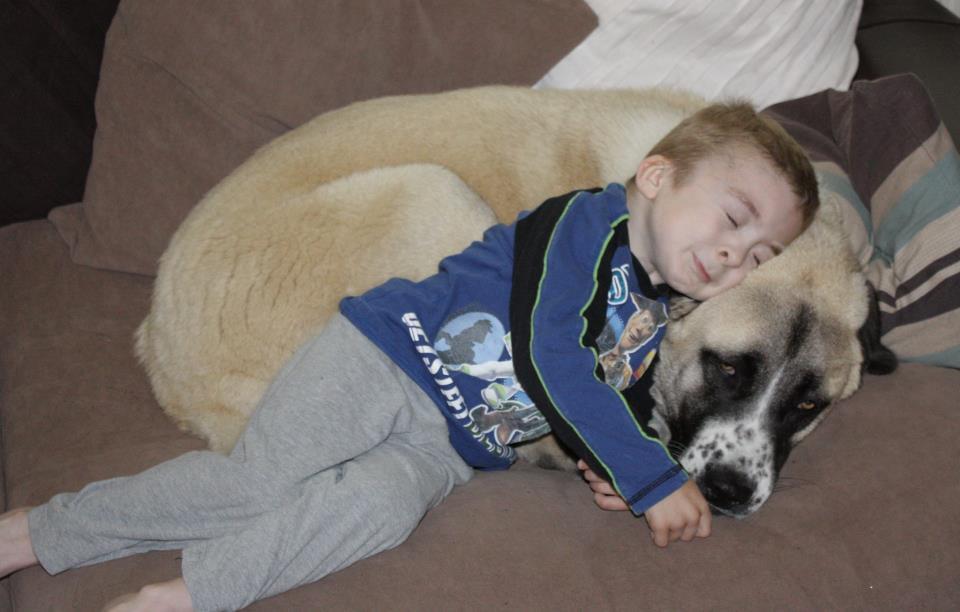 Owen e il cane  a tre zampe