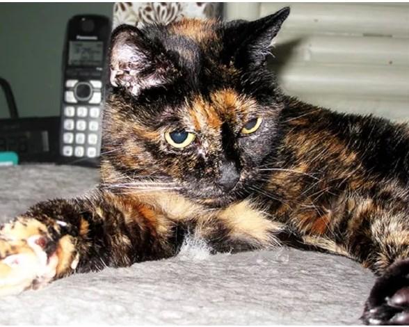 gatta più vecchia del mondo