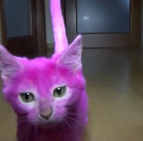 gatto rosa