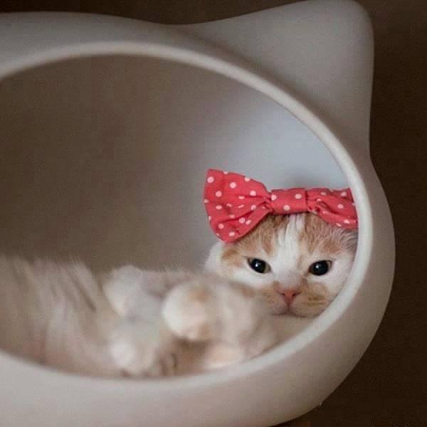 I gatti proteggono il nostro spirito e ci guariscono