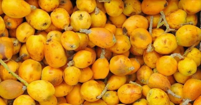 Olio di Marula, potentissimo idratante per la pelle e non solo