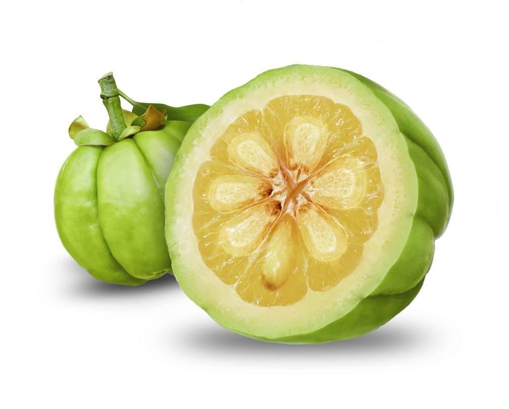 Garcinia Cambogia , il frutto che aiuta a dimagrire