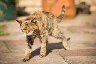 Lettera di un gatto
