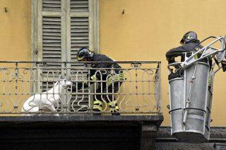 Multa per chi lascia il cane sul balcone